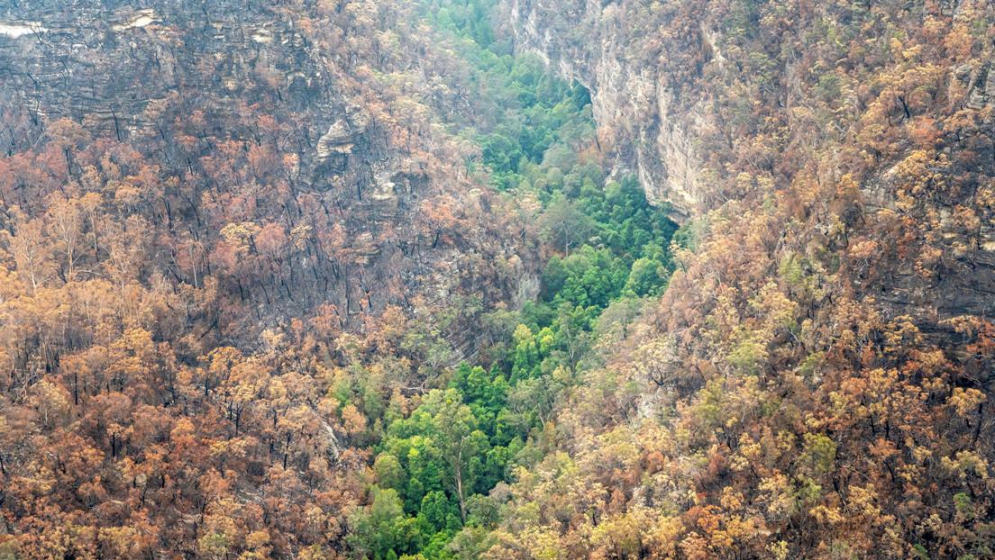 VIDEO: Bomberos australianos salvan de las llamas un bosque de 'árboles dinosaurio' de cientos de millones de años