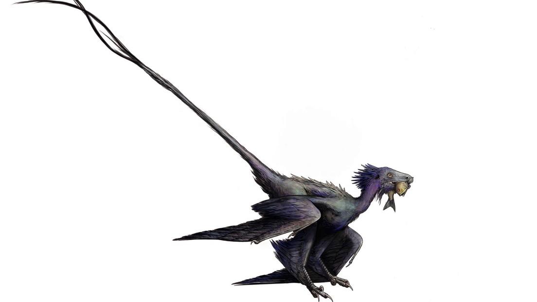 FOTO: Descubren un 'dragón danzante', especie antes desconocida de dinosaurio alado que ofrece nuevos detalles sobre la evolución