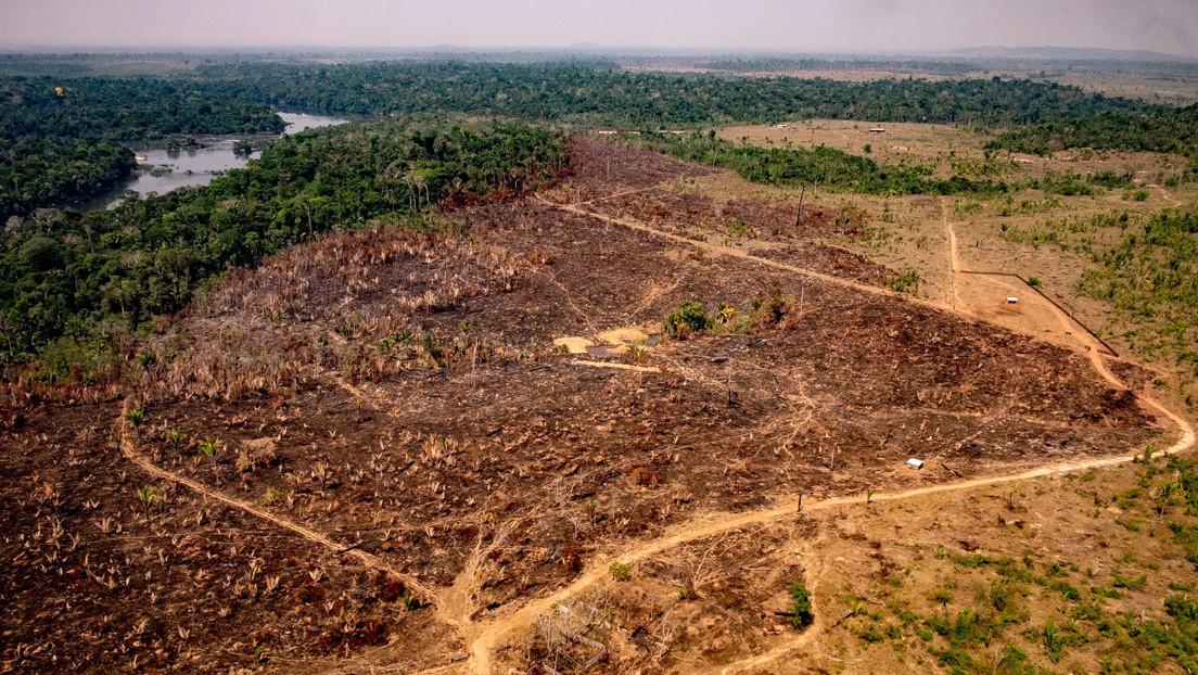 """¿Cambio de postura? Bolsonaro anuncia la creación de un consejo para la """"defensa y desarrollo"""" de la Amazonía"""