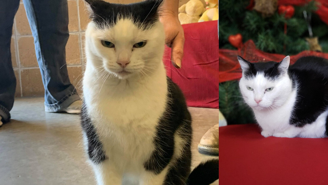 """Se busca hogar para Perdita, """"la peor gata del mundo"""": no tiene corazón, pero sí hábitos diabólicos"""