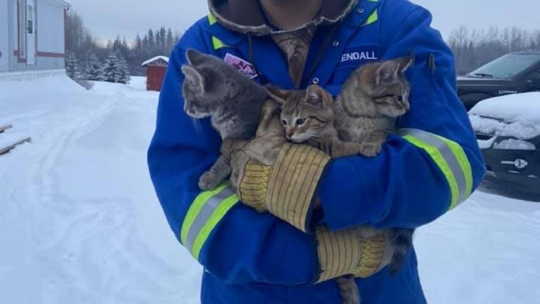 VIDEO: Salva a tres gatitos de morir congelados con ayuda de una taza de café