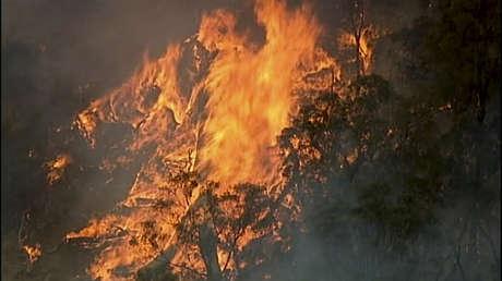 Más de 480 millones de animales murieron en los incendios que convirtieron a Australia en un 'horno'