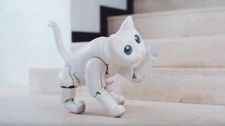 Presentan a MarsCat, la gata robótica que puede ser juguetona o ignorar a su dueño según cómo la trate