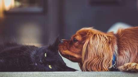 VIDEO: Un gato cede a la tentación de golpear las enormes orejas de un perrito (pero se arrepiente enseguida)
