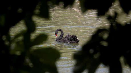 El coronavirus 2019-nCoV podría convertirse en el 'cisne negro' más grave de la economía mundial