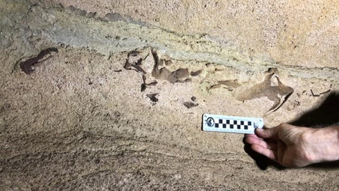 FOTOS: Hallan en EE.UU. la cabeza de un enorme  tiburón que vivió hace 340 millones de años