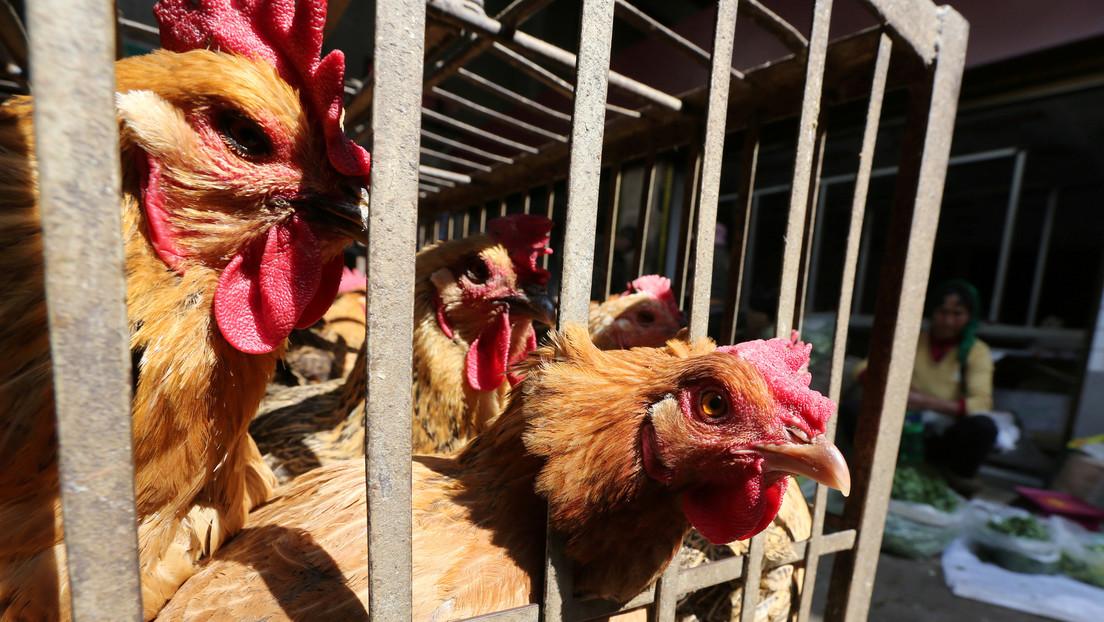 China informa de un brote de gripe aviar en medio de la batalla contra el coronavirus 2019-nCoV