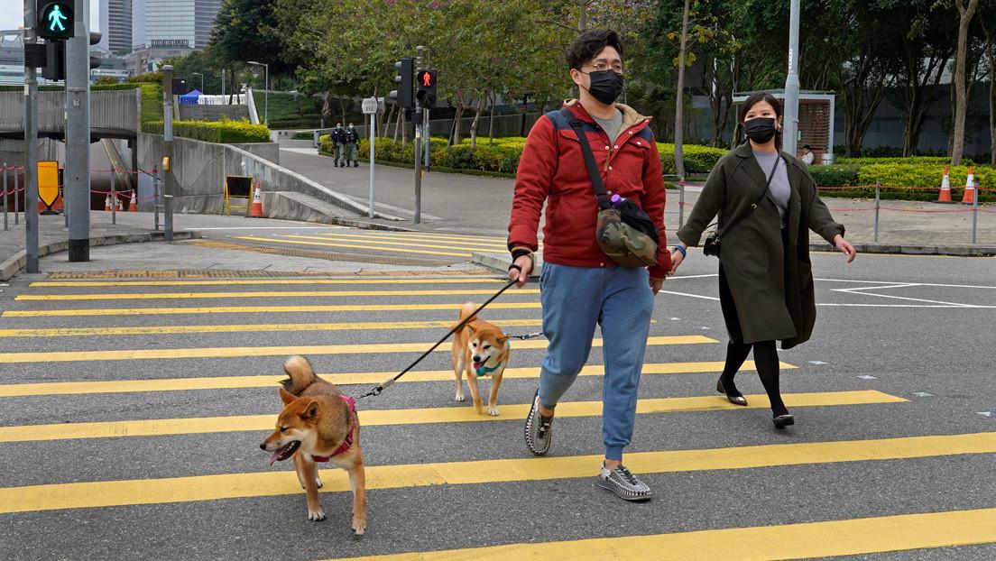 Activistas salvan a más de mil mascotas encerradas en casas vacías de Wuhan por el coronavirus