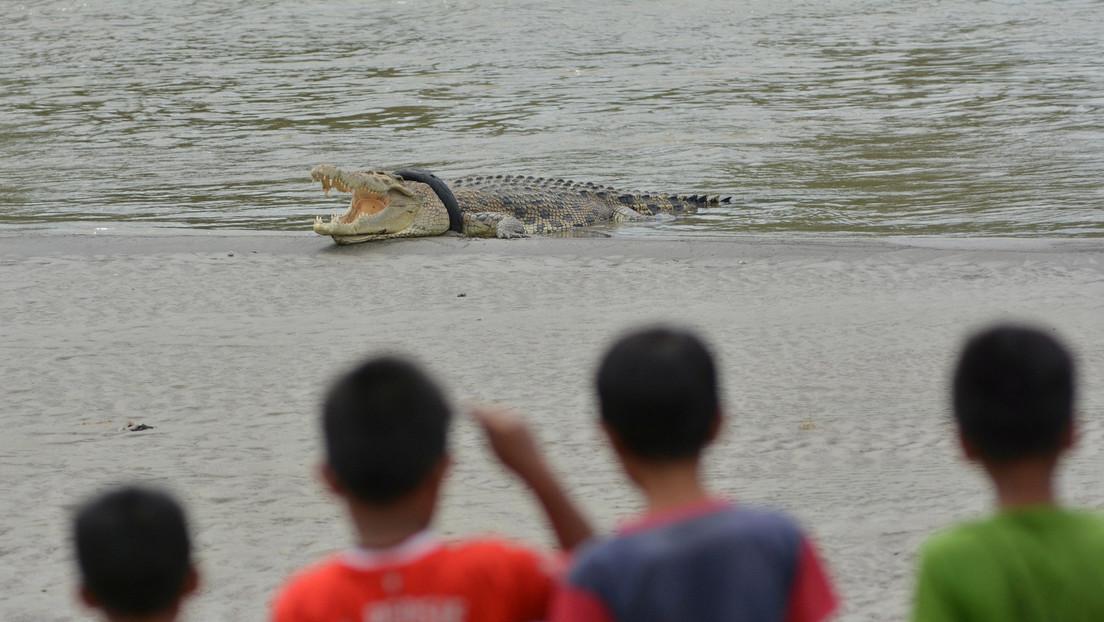 ¿No hay un valiente? Buscan quien libere a un cocodrilo a punto de asfixiarse por un neumático en torno al cuello