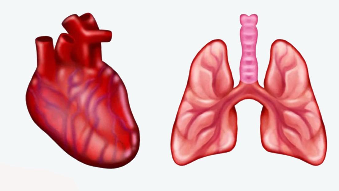 Crean emojis de corazón y pulmones anatómicamente correctos para dispositivos móviles