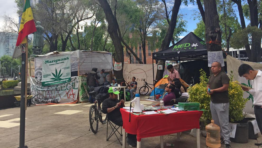 Cuenta regresiva para la legalización de la marihuana en México