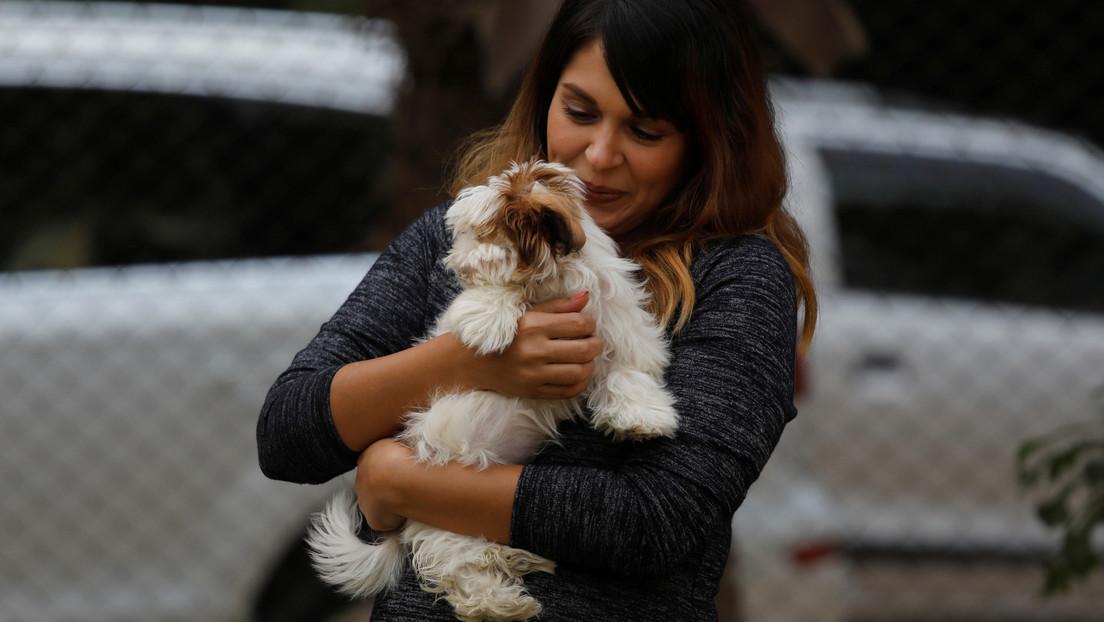 PETA pide que se llame 'compañeros' a los animales en lugar de 'mascotas'