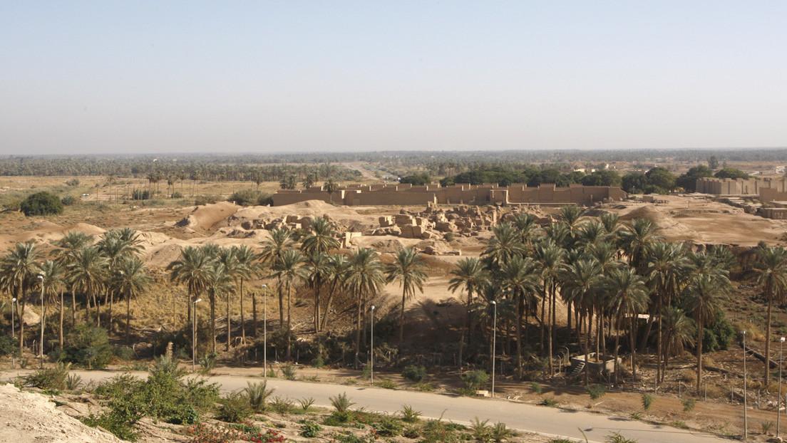 Germinan con éxito 6 palmas datileras plantadas a partir de semillas de hace más de 2.000 años