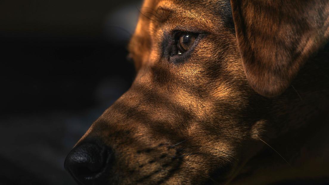 VIDEO: Un perro contempla ensimismado el incendio que provocó por accidente en casa