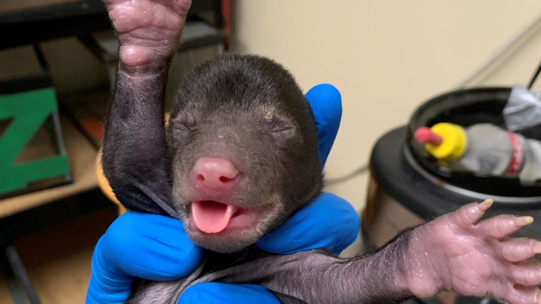 VIDEO: Un perro 'regala' a sus dueños una cría de oso