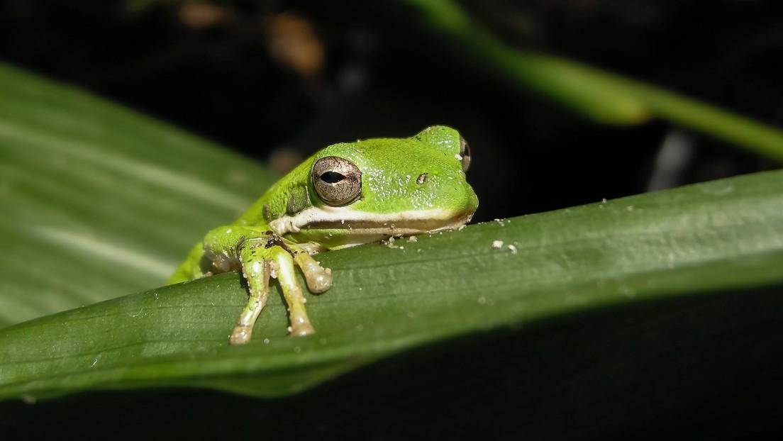 El cambio climático podría acabar con un tercio de las especies de animales y plantas en 50 años