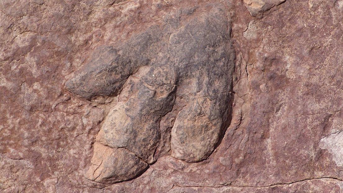 Resuelven el misterio de las huellas de dinosaurios encontradas en el techo de una cueva australiana