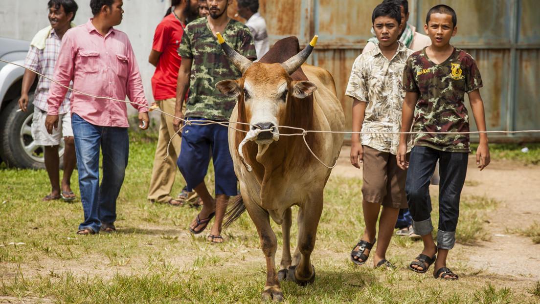 VIDEO: Un toro salta a las gradas y embiste a una mujer durante un espectáculo en Tailandia