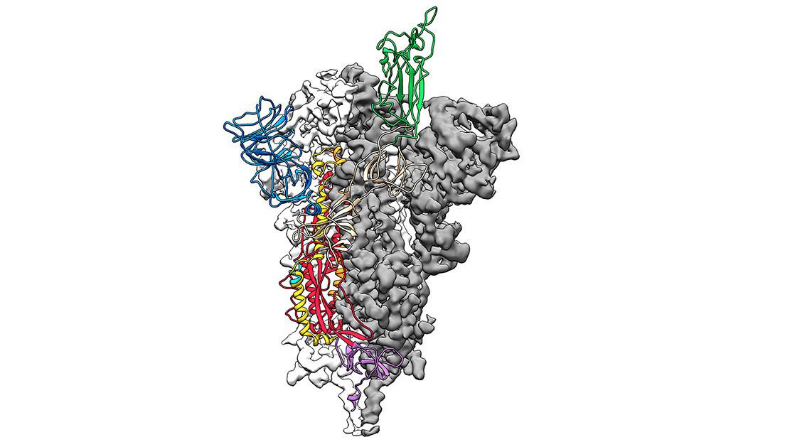 El primer mapa 3D de la estructura atómica del coronavirus abre el camino para el desarrollo de una vacuna