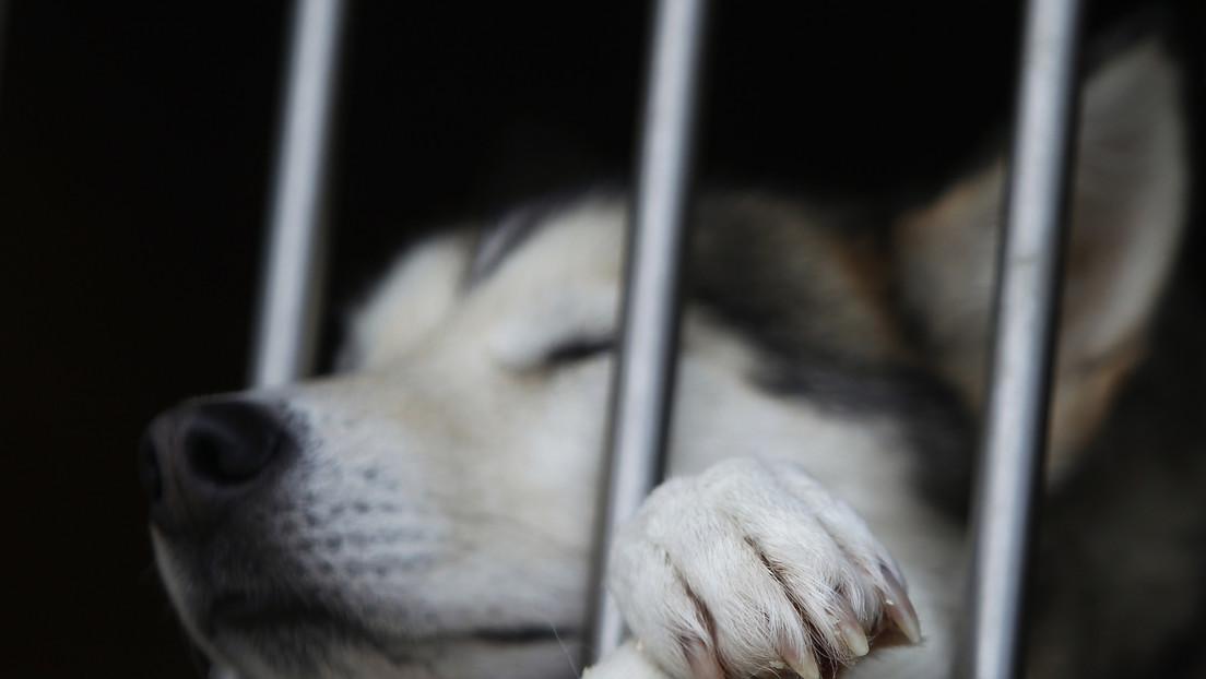 El 'Hachiko' ruso: un perro espera cada día 8 horas a su dueña en la puerta de su trabajo
