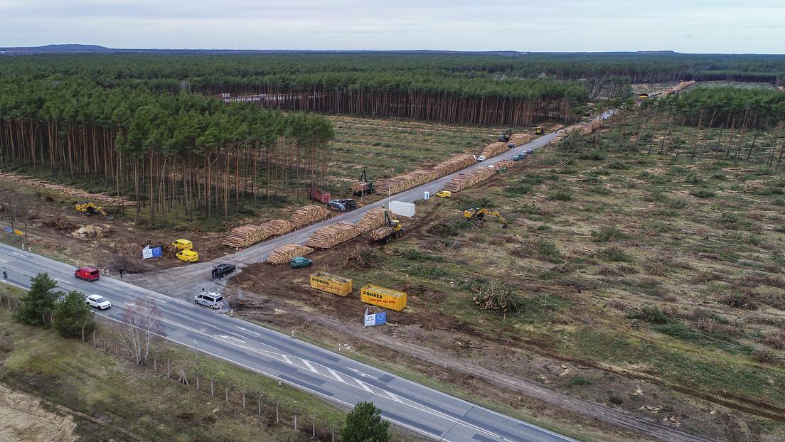 La Justicia alemana permite a Tesla talar un bosque donde planea levantar su Gigafábrica europea