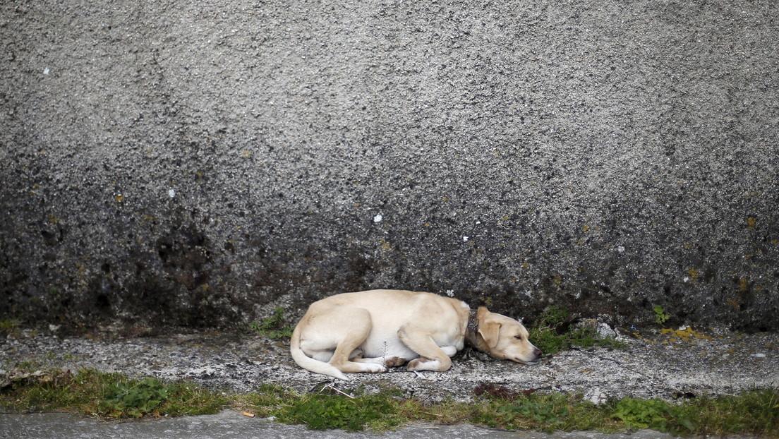 Una perrita preñada salva a sus amos de una cobra letal a costa de su propia vida