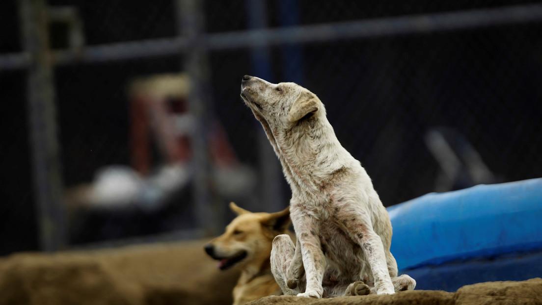 FOTOS: Un perrito callejero interrumpe la sesión de fotos de una joven y se roba el corazón de la Red
