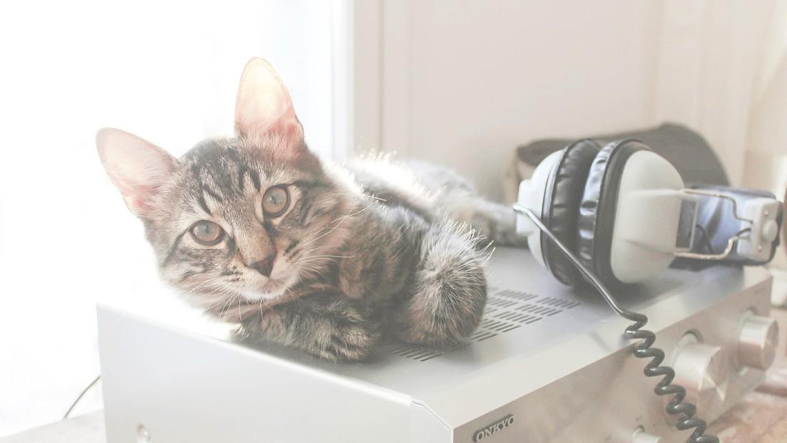 La música felina calma a los gatos más que la clásica (y puede escucharla aquí)