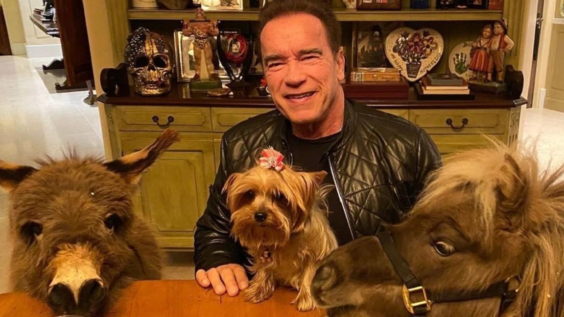 VIDEO: Arnold Schwarzenegger adopta un mini burro como mascota y muestra cómo se instala en su nuevo hogar