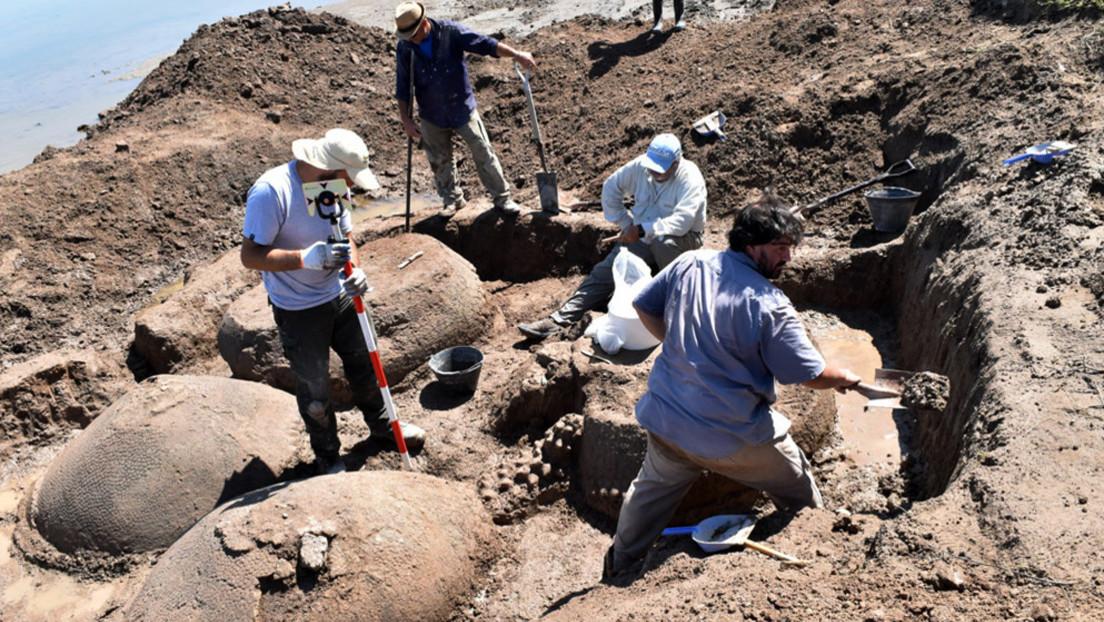 Un granjero argentino se topa por accidente con aparentes rocas gigantes, pero resultan ser animales que vivieron hace más de 10.000 años