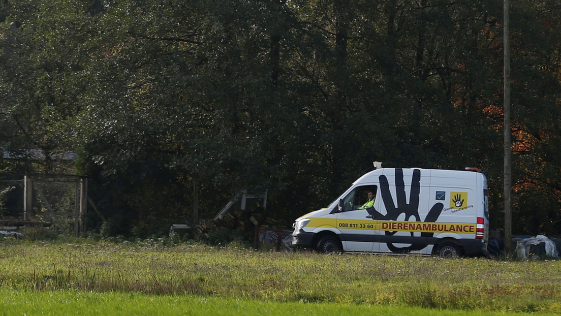Confirman el primer caso del coronavirus en Países Bajos