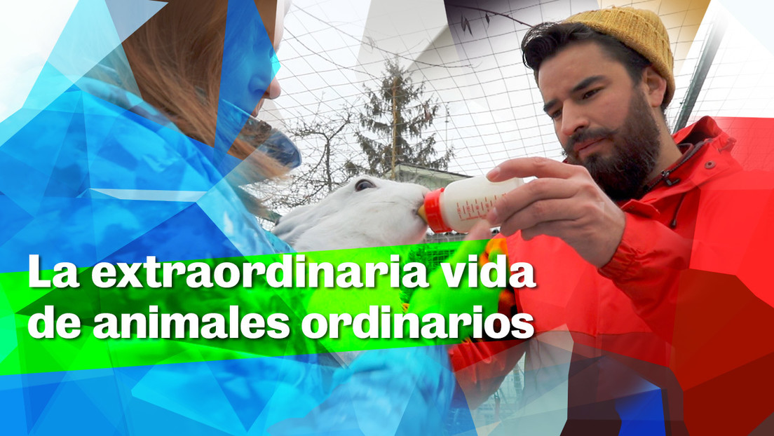 La extraordinaria vida de animales ordinarios