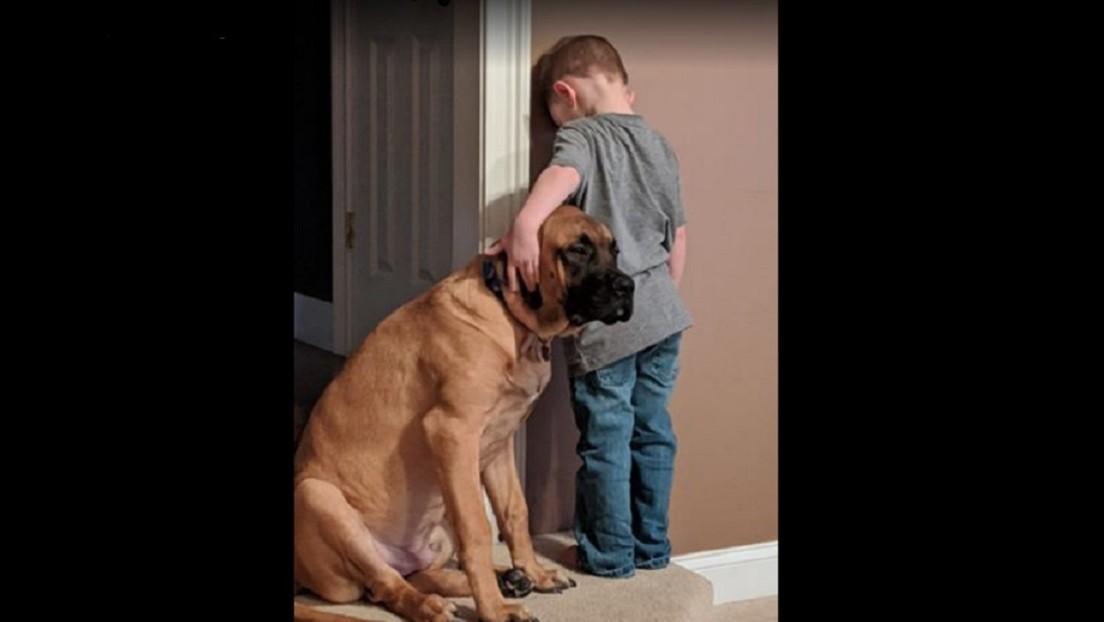 FOTO: Un niño es castigado y su perro le demuestra que los amigos están en las buenas y en las malas