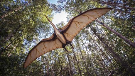 Hallan restos de antiguos pterosaurios caminantes en el sur de Francia