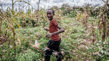 La peor plaga de langostas del desierto en las últimas décadas pone en jaque la alimentación de millones de personas en África oriental