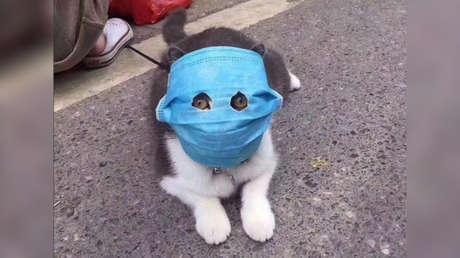 FOTOS: Hasta las mascotas llevan mascarillas en China al tratar sus dueños de protegerlos del coronavirus