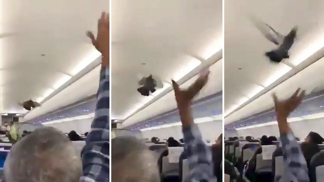 Palomas 'polizón' causan revuelo en un avión cuando se disponía a despegar en la India (VIDEO)