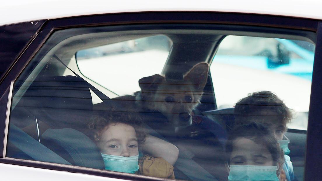Australia advierte de un brote de coronavirus canino entre galgos de carreras