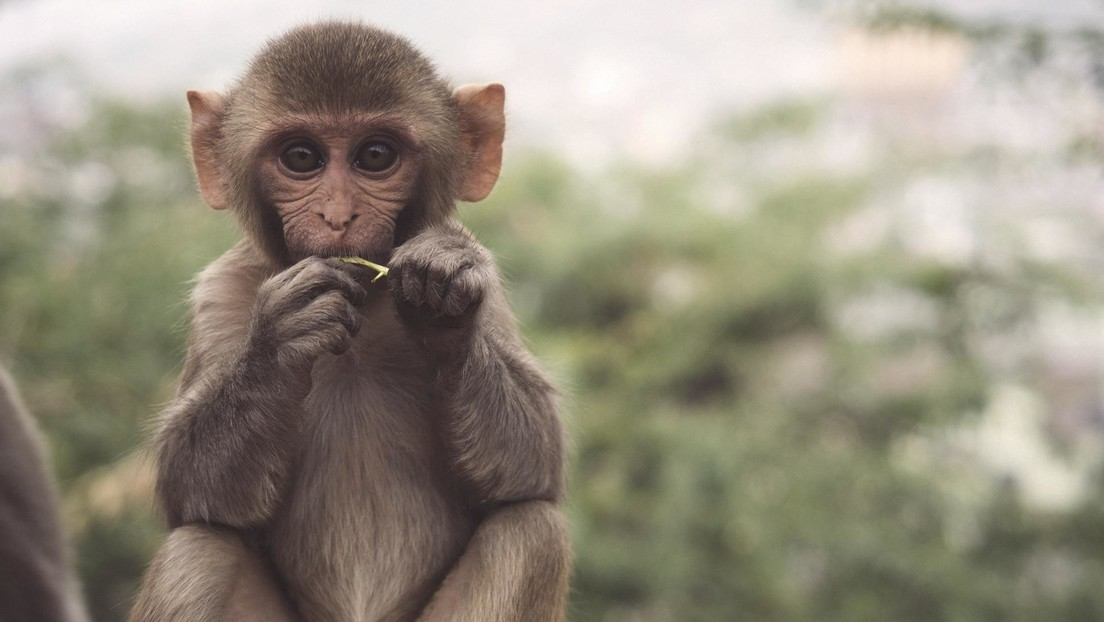 Revelan un video con maltratos animales secretos de EE.UU. que costaron 16 millones de dólares