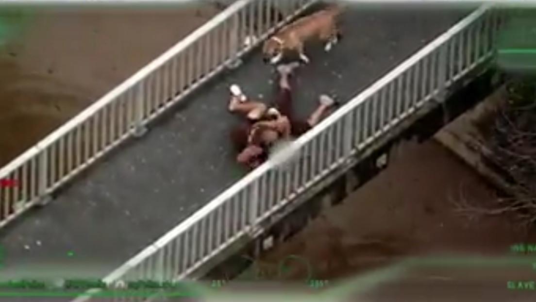 VIDEO: Un transeúnte que pasea a su perro derriba a un fugitivo que escapaba de la Policía