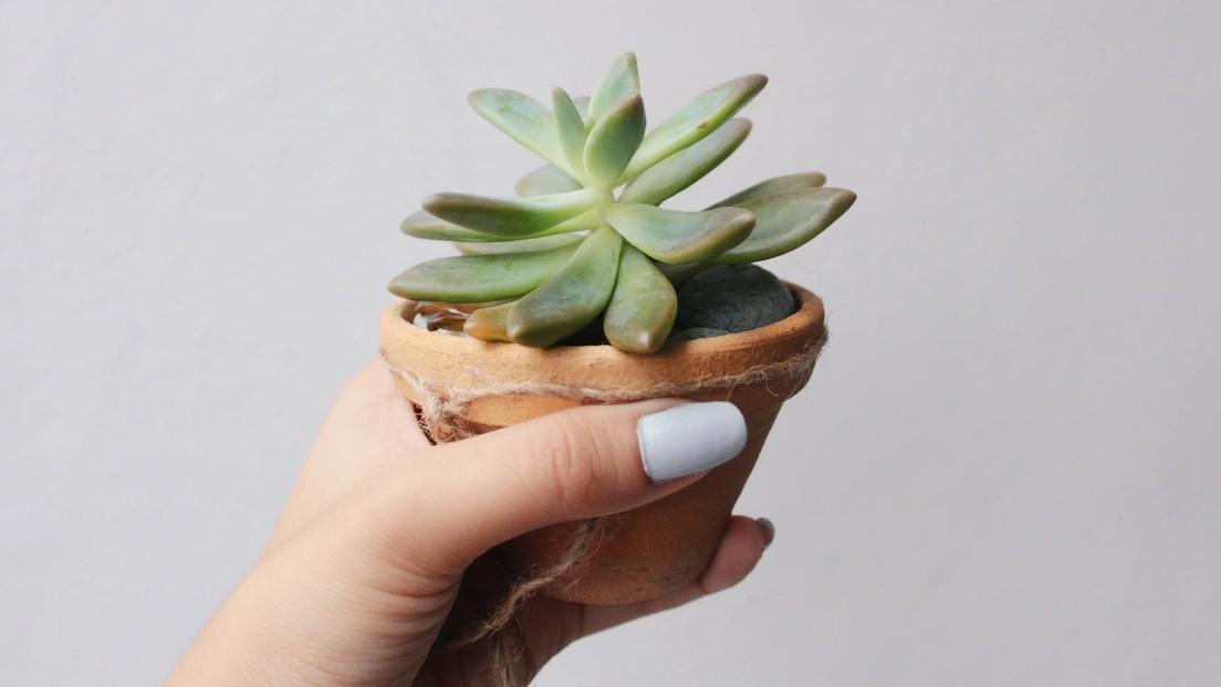 Cuida una planta durante dos años sin darse cuenta de que era de plástico (FOTOS)