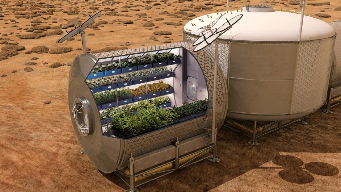Las lechugas cultivadas en órbita son tan saludables como las terrestres (e incluso más)