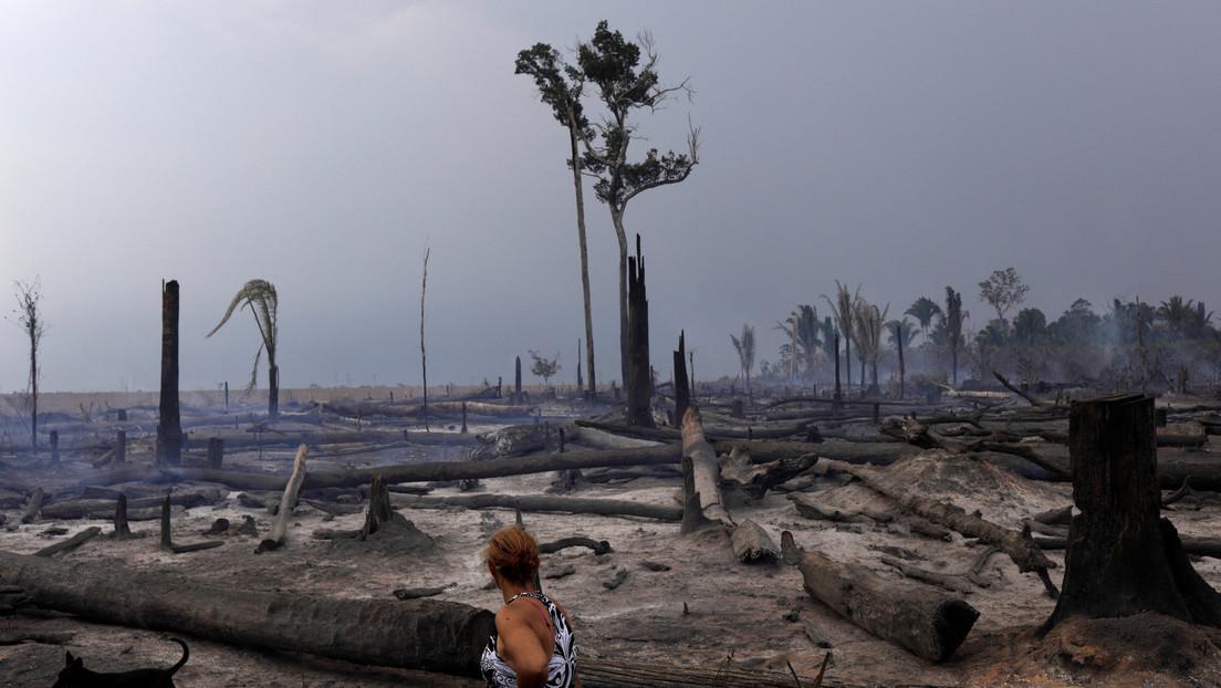Los bosques tropicales de la Amazonia y África pierden su capacidad para absorber dióxido de carbono