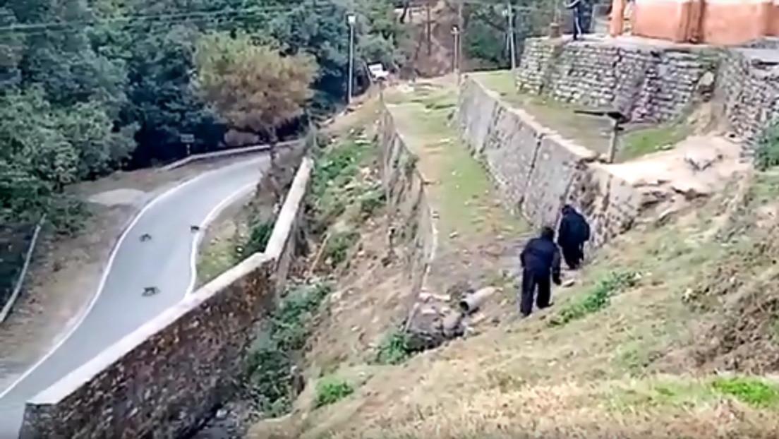VIDEO: Policías indios se disfrazan de osos para ahuyentar a una manada de monos 'invasores'