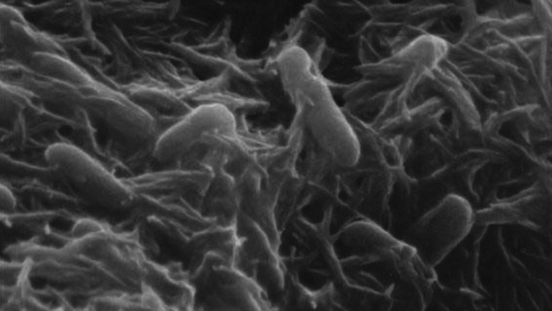 Científicos explican cómo una bacteria logra 'respirar' dentro de una roca
