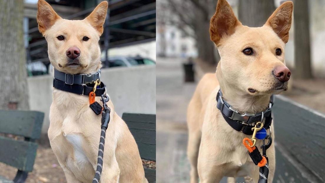 VIDEO: Una perra sigue hasta un refugio el camión que transportó a sus cachorros durante kilómetros