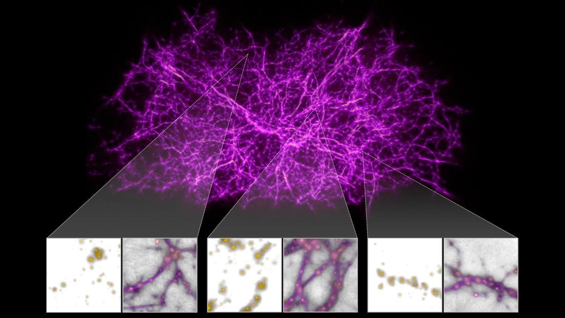 I primi tipi di muffe aiutano gli astronomi a mappare le strutture complessive dell'universo