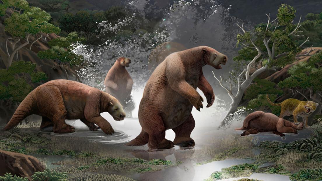 VIDEO, FOTOS: Paleontólogos de Argentina y Ecuador presentaron un 'Yeti sudamericano' de más de 10.000 años de antigüedad