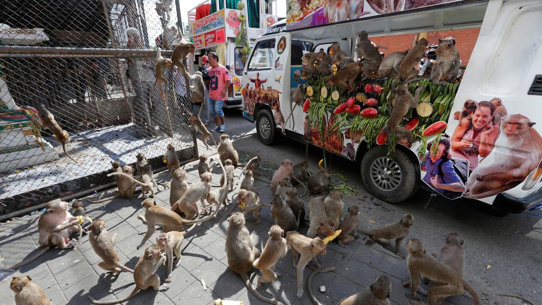 VIDEO: Cientos de monos causan caos en calles de Tailandia peleando por comida luego que el coronavirus frenara el turismo en ese país
