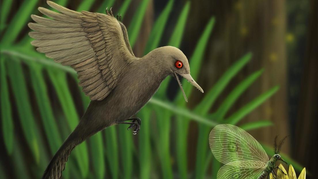 VIDEO, FOTO: Descubren un fósil del dinosaurio más pequeño jamás encontrado en ámbar de 99 millones de años
